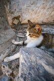 Un gatto e una pietra fotografie stock libere da diritti