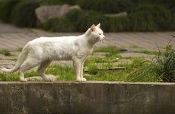 Un gatto esterno sul Prowel Fotografia Stock Libera da Diritti