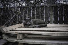 Un gatto grigio smarrito su un pallet fotografia stock libera da diritti