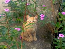 Un gatto nascosto! Fotografia Stock Libera da Diritti