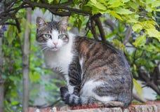 Un gatto nel telaio Fotografia Stock