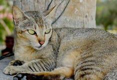 Un gatto nell'attesa fotografie stock
