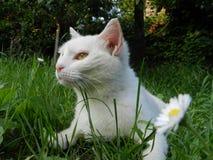 Un gatto nell'erba Fotografia Stock