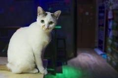 Un gatto nella locanda immagini stock