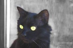 Un gatto nero Fotografia Stock Libera da Diritti