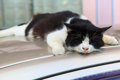 Un gatto nero Fotografia Stock