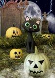 Un gatto nero amichevole nei bordi di un cimitero dalle zucche di Halloween immagini stock