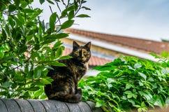 Un gatto nero e giallo che si siede su un recinto del giardino Immagine Stock Libera da Diritti