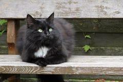 Un gatto persiano abbastanza nero Fotografia Stock Libera da Diritti