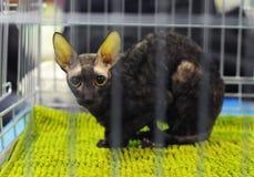 Un gatto piacevole alla mostra fotografia stock libera da diritti