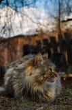 Un gatto piacevole del lookig che si siede sull'iarda fotografie stock libere da diritti