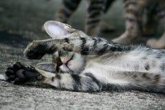 Un gatto pigro Immagine Stock