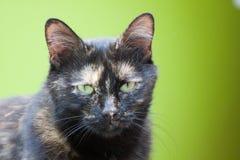 Un gatto in primo piano Fotografia Stock