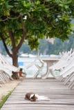 Un gatto rilassato si trova sul terrazzo di un ristorante tropicale del caffè Fotografia Stock