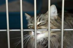 Un gatto si siede nella sua gabbia al riparo animale immagine stock libera da diritti