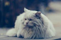 Un gatto smarrito immagine stock