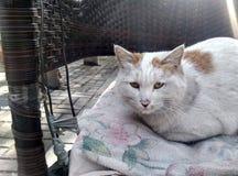 Un gatto smarrito Fotografie Stock Libere da Diritti