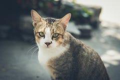 Un gatto smarrito Fotografia Stock Libera da Diritti