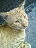 Un gatto smarrito arancio Immagine Stock Libera da Diritti