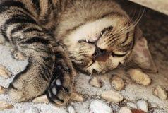 Un gatto smarrito che dorme in una posa maldestra fotografia stock