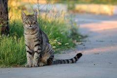 Un gatto solo con lo sguardo astuto Fotografia Stock