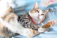Un gatto sta allungando. Immagini Stock