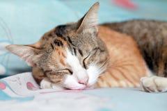 Un gatto sta dormendo. Immagine Stock Libera da Diritti