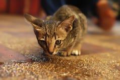Un gatto sta guardando Fotografia Stock Libera da Diritti