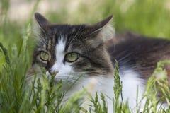 Un gatto su fondo verde Immagini Stock