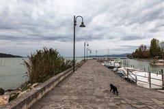 Un gatto su un pilastro sul lago Umbria Trasimeno, con alcune barche messe in bacino e sotto un cielo nuvoloso Immagine Stock