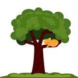 Un gatto su un albero Fotografia Stock
