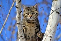 Un gatto su un albero Immagini Stock