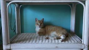 Un gatto su un carrello di vimini stock footage