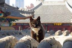 Un gatto su un tetto cinese del tempio Fotografia Stock Libera da Diritti