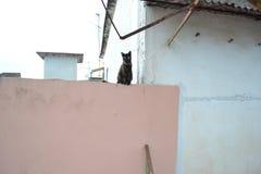 Un gatto su una parete rosa Fotografia Stock Libera da Diritti