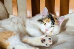 Un gatto su una sedia di legno immagine stock libera da diritti