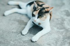 Un gatto sul pavimento del cemento fotografia stock libera da diritti