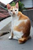 Un gatto sulla cima del tetto Immagine Stock