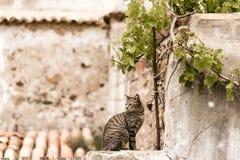 Un gatto sulla parete immagine stock libera da diritti