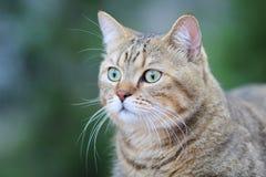 Un gatto sveglio Fotografia Stock Libera da Diritti