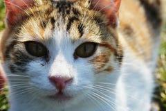 Un gatto sveglio che guarda alla macchina fotografica Immagine Stock