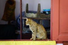 Un gatto sveglio che si rilassa alla casa rurale fotografia stock