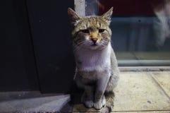 Un gatto triste fotografie stock libere da diritti
