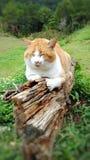 Un gatto in un giardino Fotografia Stock