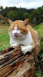 Un gatto in un giardino Immagini Stock