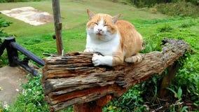 Un gatto in un giardino Immagine Stock Libera da Diritti
