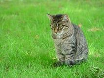 Un gatto in un giardino zoologico Fotografia Stock