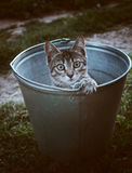 Un gatto in un secchio Fotografia Stock