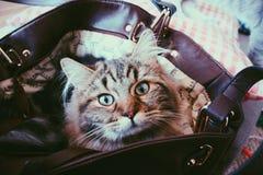 Un gatto in una borsa Fotografia Stock