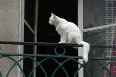 Un gatto in una finestra Fotografie Stock Libere da Diritti